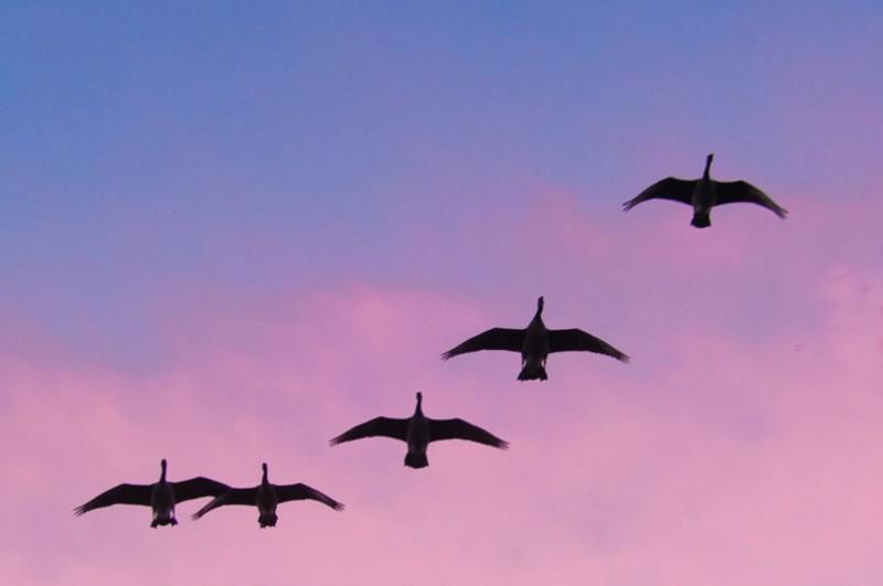 Pourquoi migrer ? Et... comment ?