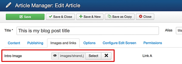 Divide article input fields